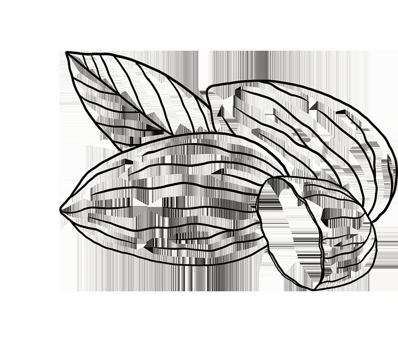 expergreen-illustrazione-mandorla