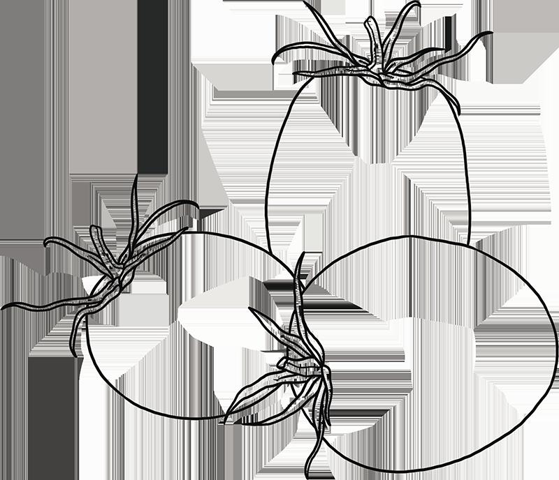 expergreen-illustrazione-pomodoro
